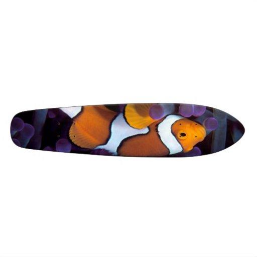 fish board skate decks