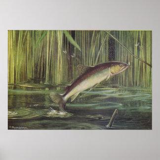 Fish - Brown Trout - Salmo trutta Poster