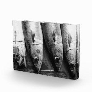 Fish closeup in black and white