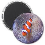 fish,clown fish refrigerator magnet