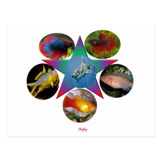 fish,goldfish,carp, fishing, sea, ocean, animal postcard