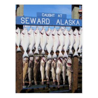 Fish in Seward, Alaska Postcard