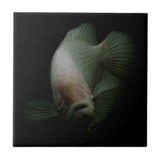 Fish in Tank Portrait Tile