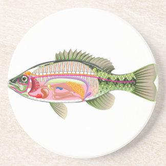 Fish internal organs Vector Art diagram Anatomy Beverage Coaster