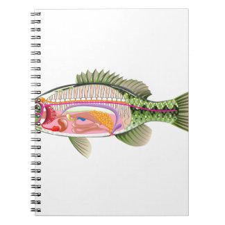 Fish internal organs Vector Art diagram Anatomy Spiral Note Book