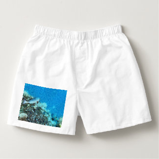 Fish moving over the reef boxers