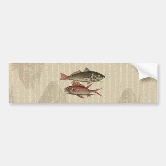 fish red perch Vintage fisherman gift Bumper Sticker
