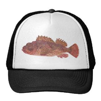 Fish - Red Rock Cod - Scorpaena cardinalis Trucker Hat