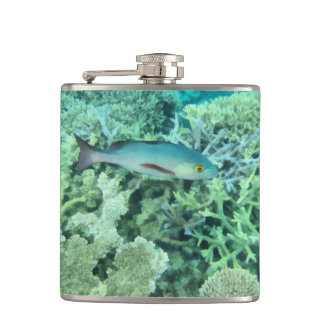 Fish roaming the reef hip flask