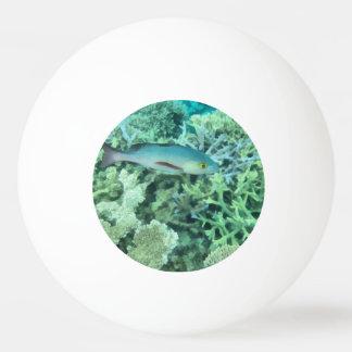 Fish roaming the reef ping pong ball