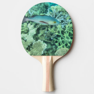 Fish roaming the reef ping pong paddle