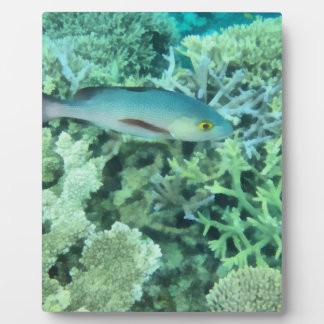 Fish roaming the reef plaque