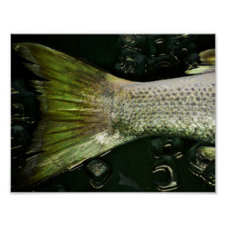 Fish tail | poster