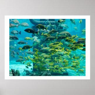 Fish Traffic Print