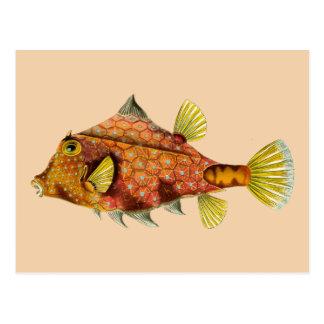 fish wrap postcard