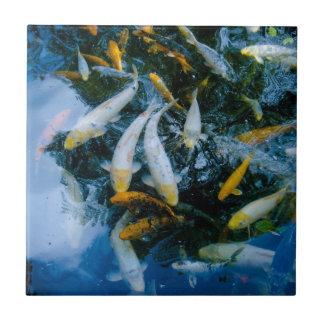 Fishes in pond tile