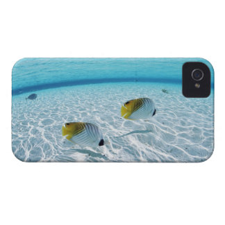 Fishes in the sea 2 iPhone 4 Case-Mate case