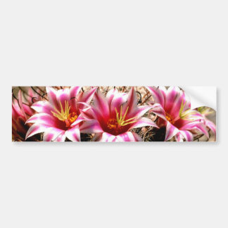 Fishhook Cactus Bumper Sticker