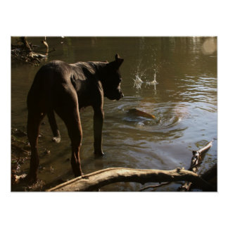 Fishin' Pit Bull Poster
