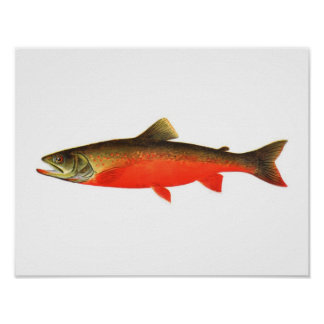 Fishing poster - Canadian Red Trout Male Fish