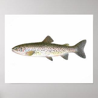 Fishing poster - Salmon Trout Fish