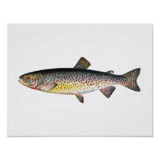 Fishing poster - Tahoe Trout Fish