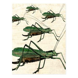 Five Green Grasshoppers or Katydids Postcard
