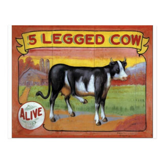Five Legged Cow Postcard