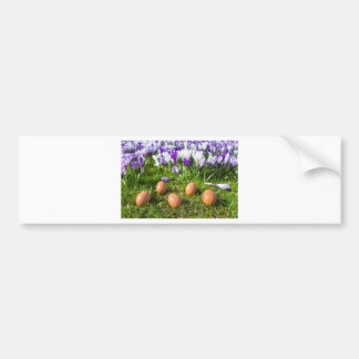 Five loose eggs lying near blooming crocuses bumper sticker