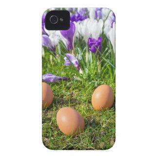 Five loose eggs lying near blooming crocuses iPhone 4 case
