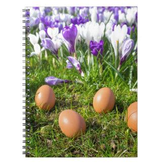 Five loose eggs lying near blooming crocuses notebooks