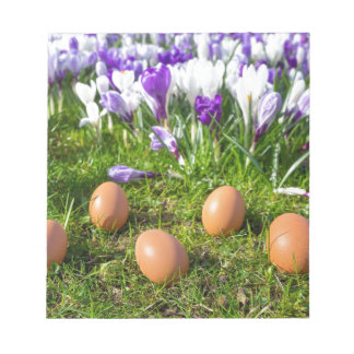 Five loose eggs lying near blooming crocuses notepads