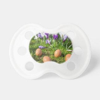 Five loose eggs lying near blooming crocuses pacifier