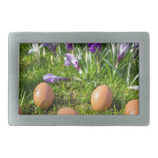 Five loose eggs lying near blooming crocuses rectangular belt buckle