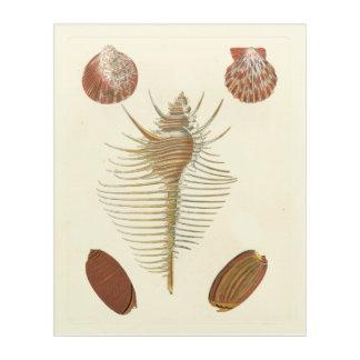Five of a Kind Seashells Acrylic Print