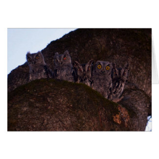 Five Owls in an Oak Hollow Card