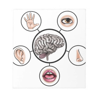 Five Senses Brain Notepads