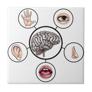 Five Senses Brain Tiles