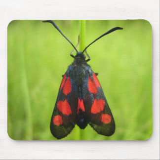 Five-Spot Burnet Moth Mouse Mat Mouse Pad