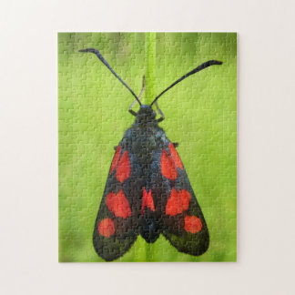 Five-Spot Burnet Moth Photo Puzzle with Gift Box