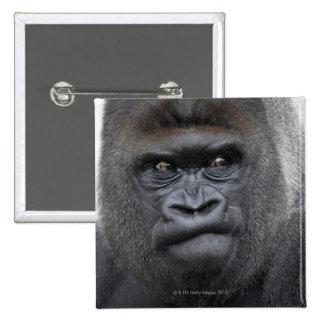 Flachlandgorilla, Gorilla gorilla, 2 Inch Square Button