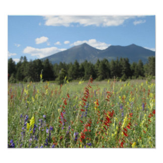 Flagstaff wildflowers poster
