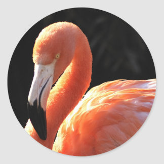 Flamingo Classic Round Sticker