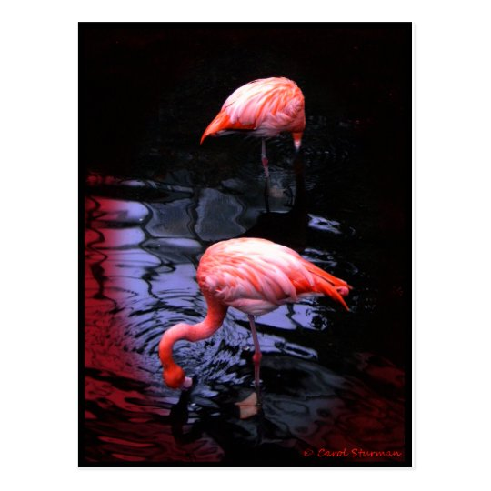 FLAMINGO copy Postcard