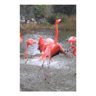 flamingo dance stationery