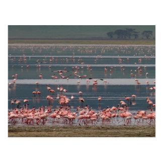 Flamingo Gathering - Postcard