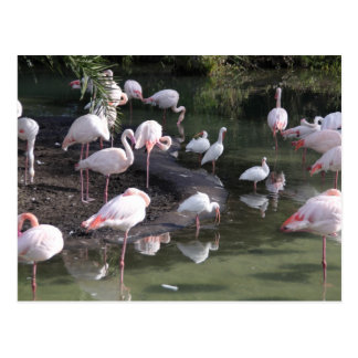 Flamingo Lake Postcard