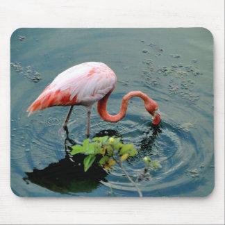 Flamingo of the Galapagos Mouse Pad