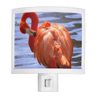 Flamingo on one leg in water nite light