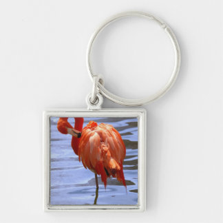Flamingo on one leg in water Silver-Colored square keychain